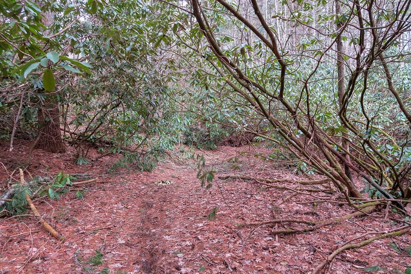 Bear Branch Trail -- 2,470'