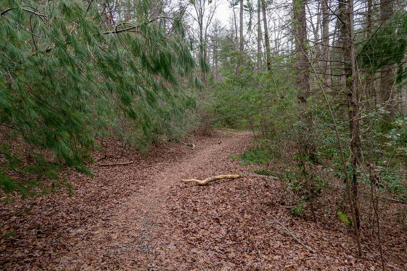 Bear Branch Trail -- 2,620'