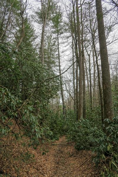 Bear Branch Trail -- 2,500'