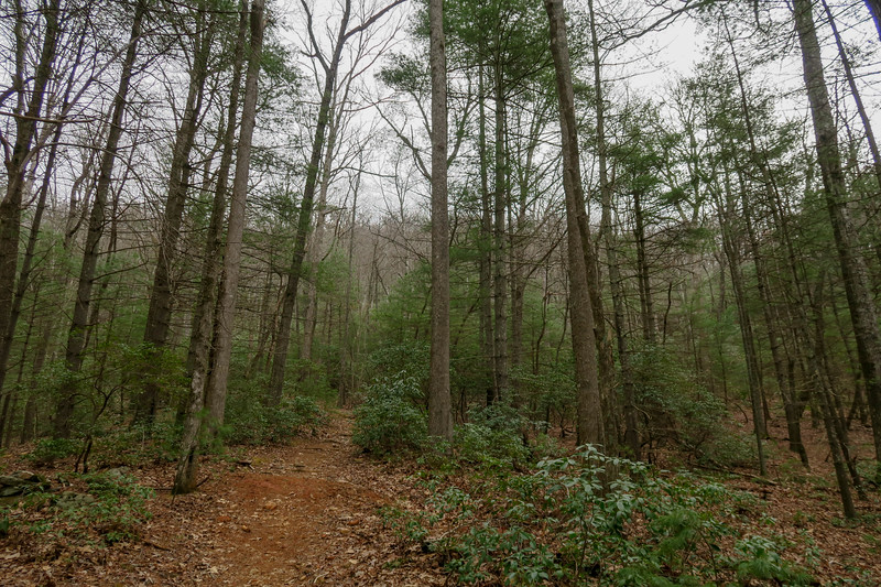 Bear Branch Trail -- 2,710'
