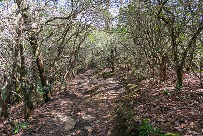 Bennett Gap Trail -- 3,500'