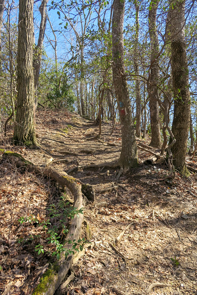 Bennett Gap/Coontree Loop Trail -- 3,300'