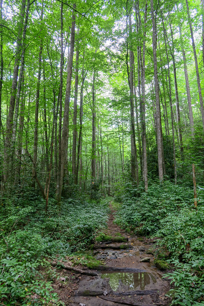 Big Creek Trail -- 2,710'