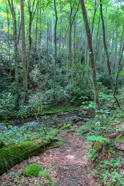 Big Creek Trail -- 2,790'