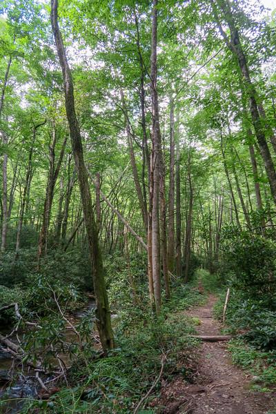 Big Creek Trail -- 2,550'