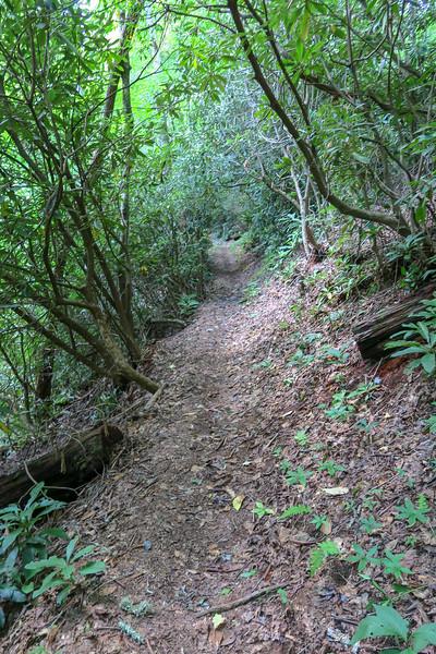 Big Creek Trail -- 2,530'