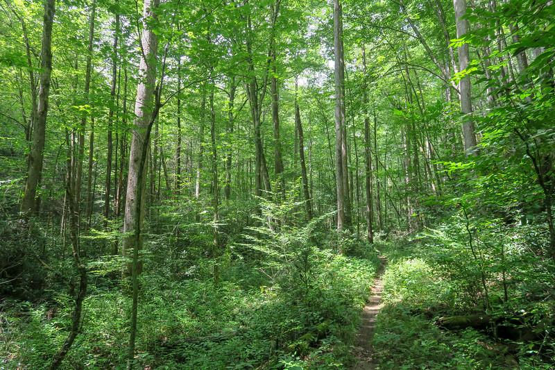Big Creek Trail -- 2,580'