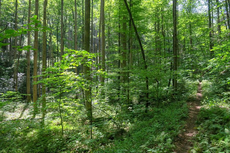 Big Creek Trail -- 2,860'