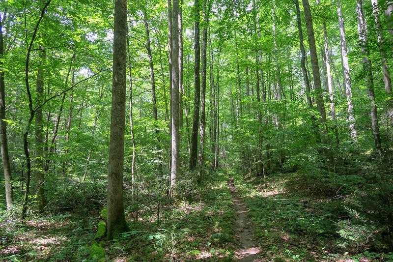 Big Creek Trail -- 2,590'