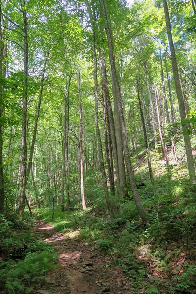 Big Creek Trail -- 2,570'