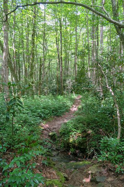 Big Creek Trail -- 2,620'