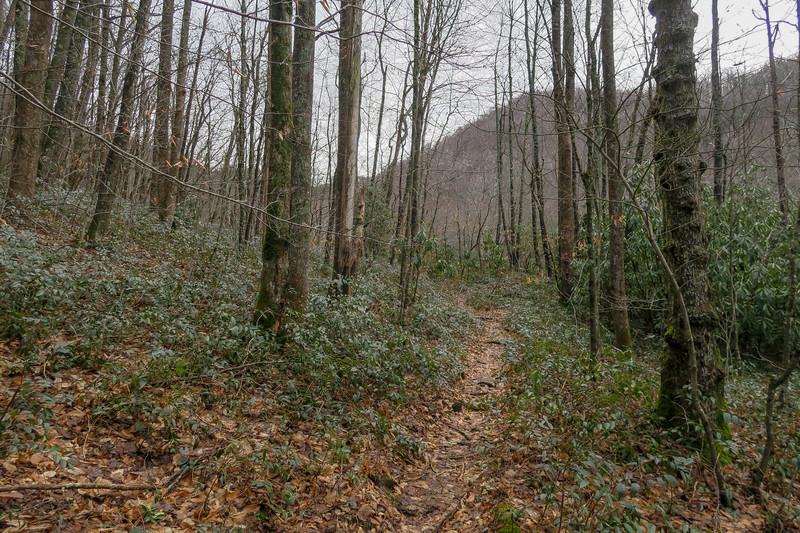 Big East Fork Trail -- 3,760'