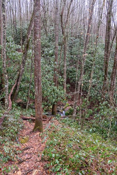 Big East Fork Trail -- 3,540'