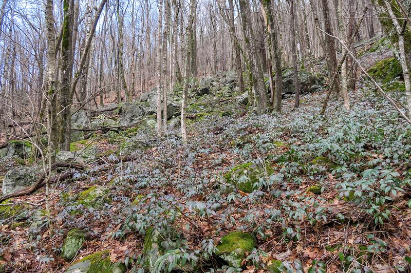 Big East Fork Trail -- 3,780'