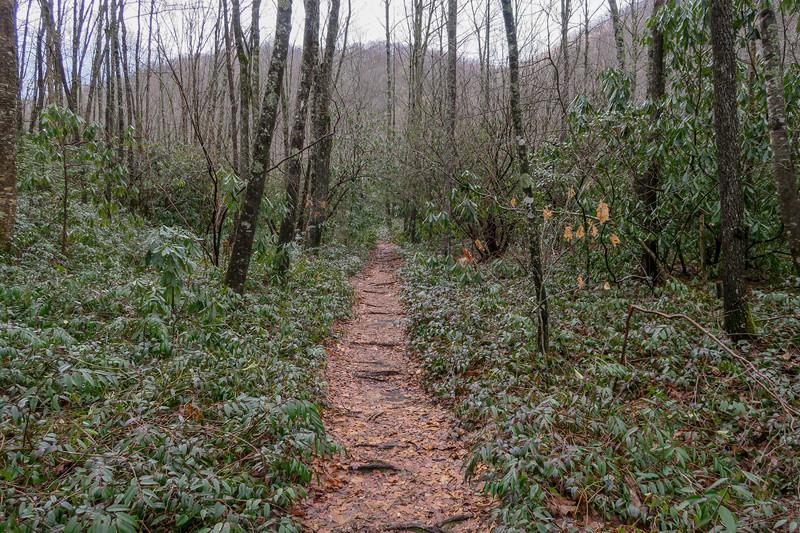 Big East Fork Trail -- 3,480'