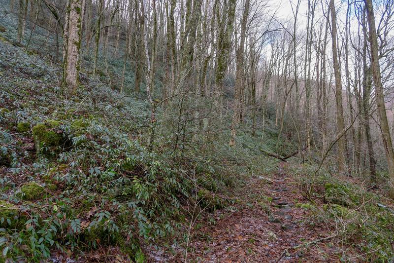 Big East Fork Trail -- 3,940'