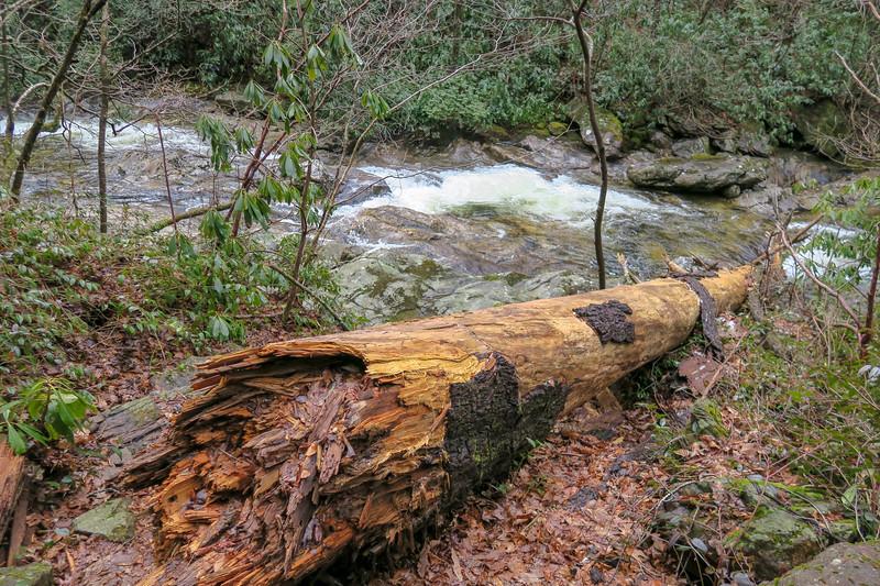 Big East Fork Trail -- 3,800'