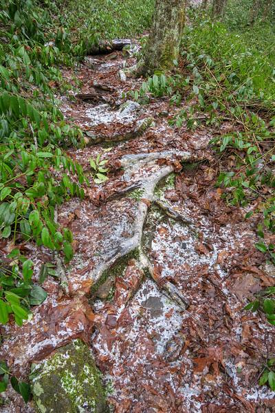 Big East Fork Trail -- 3,880'