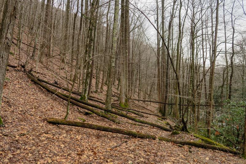 Big East Fork Trail -- 3,640'