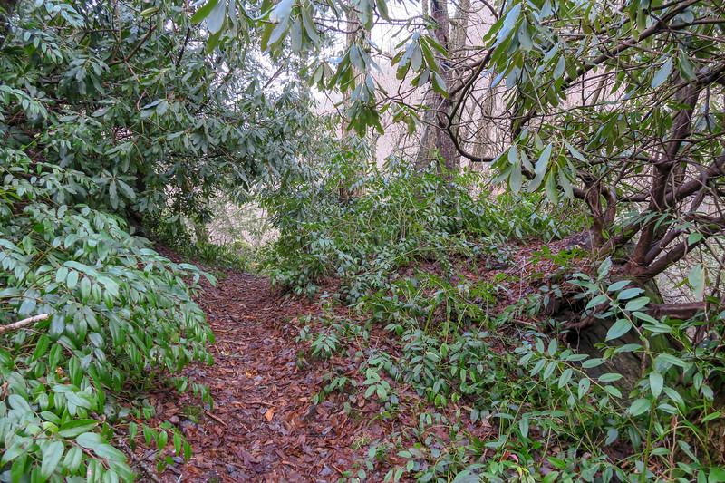 Big East Fork Trail -- 3,980'