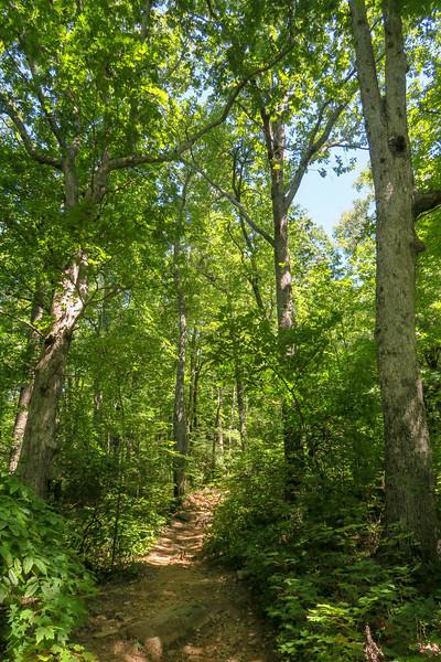 Black Mountain Trail -- 3,450'