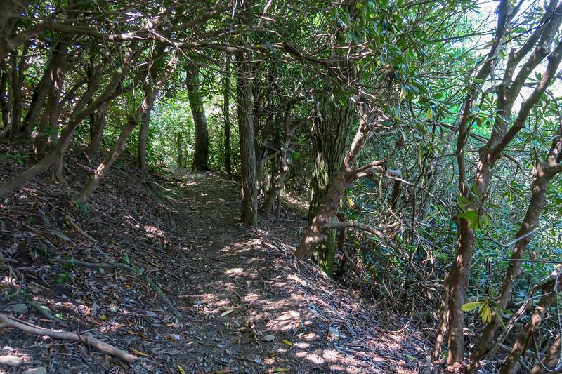 Black Mountain Trail -- 4,170'
