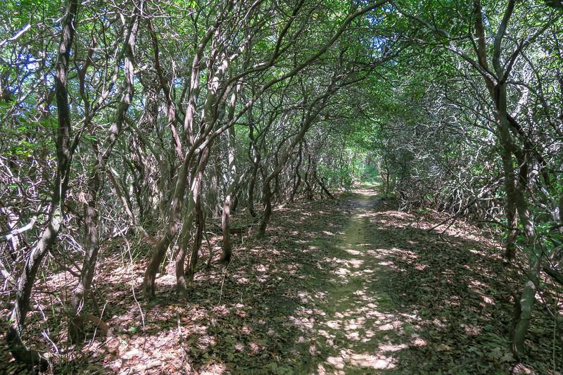 Black Mountain Trail -- 3,300'
