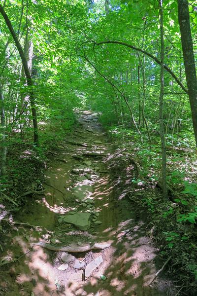 Black Mountain Trail -- 3,900'