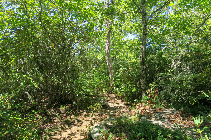 Black Mountain Trail -- 4,070'
