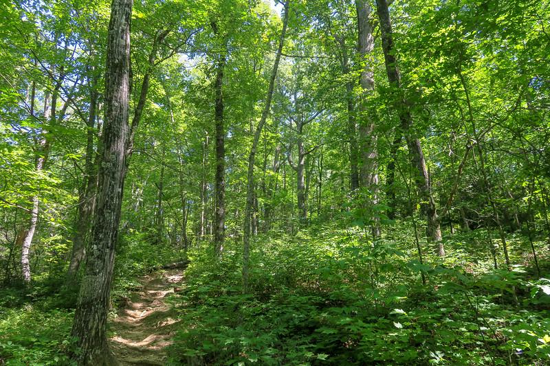 Black Mountain Trail -- 3,500'