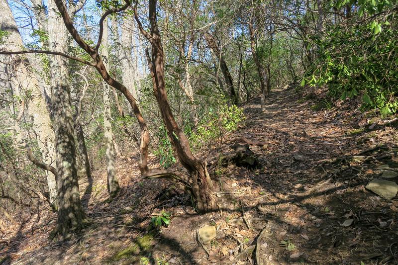 Black Mountain Trail -- 3,600'