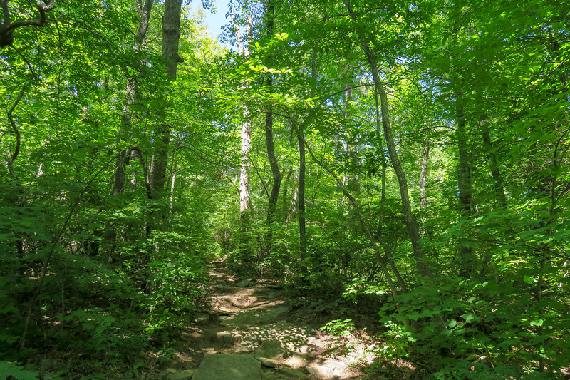 Black Mountain Trail -- 3,740'