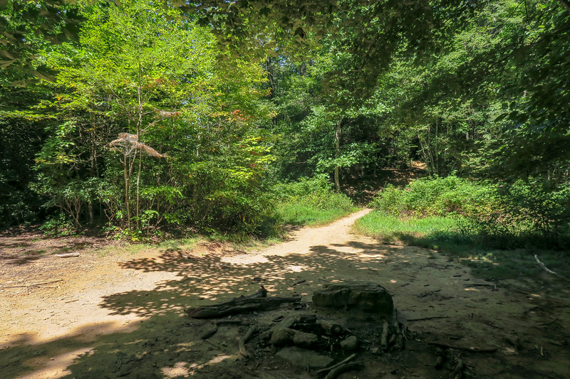 Black Mountain Trail @ Pressley Gap -- 3,340'