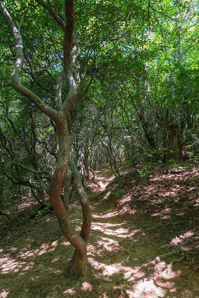 Black Mountain Trail -- 3,250'