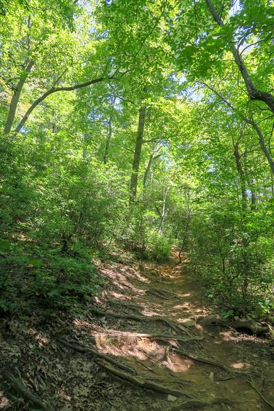 Black Mountain Trail -- 3,350'