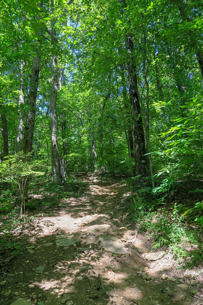 Black Mountain Trail -- 3,680'