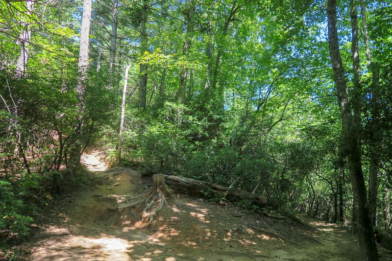 Black Mountain Trail -- 3,120'