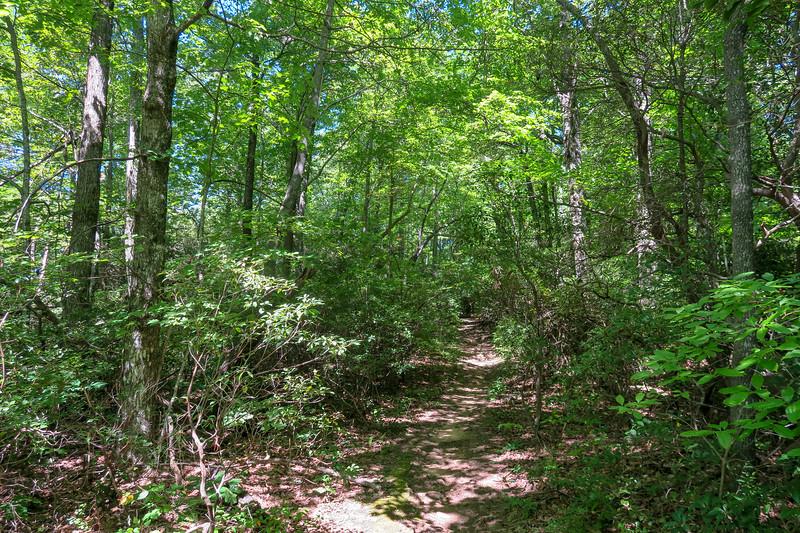 Black Mountain Trail -- 3,800'