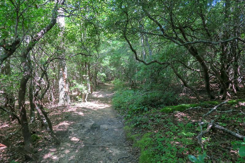Black Mountain Trail -- 3,380'