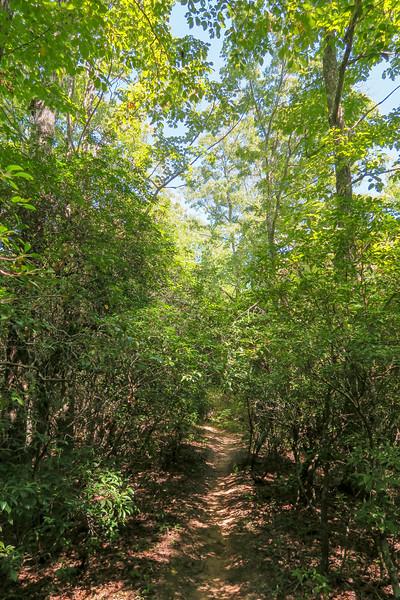 Black Mountain Trail -- 3,200'
