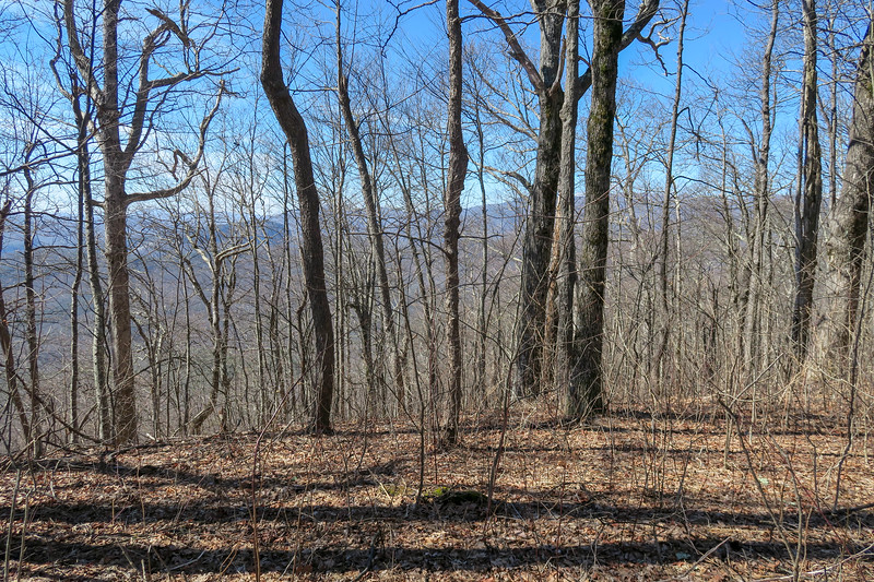Black Mountain Trail @ Clawhammer Mountain -- 4,120'