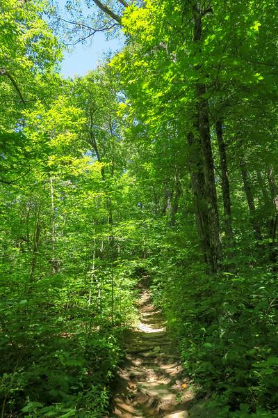 Black Mountain Trail -- 3,950'
