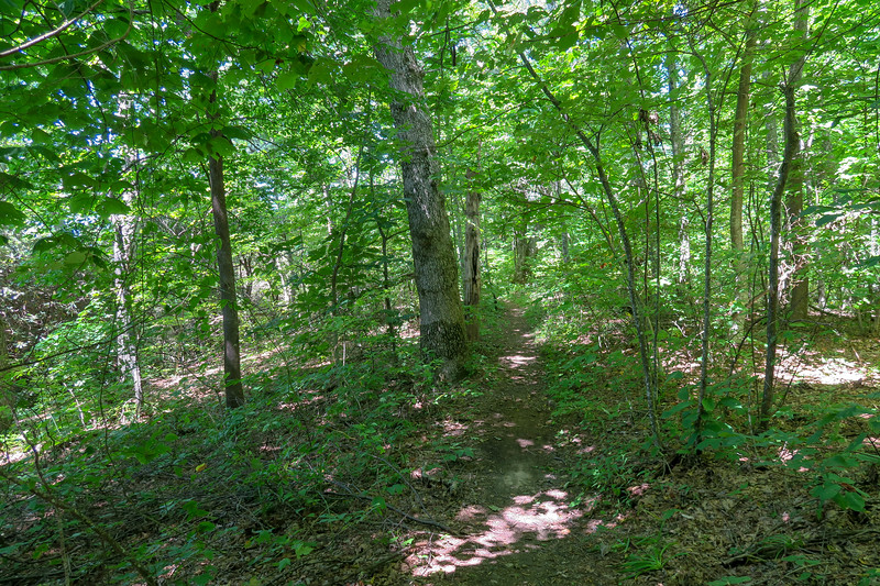 Black Mountain Trail -- 4,200'