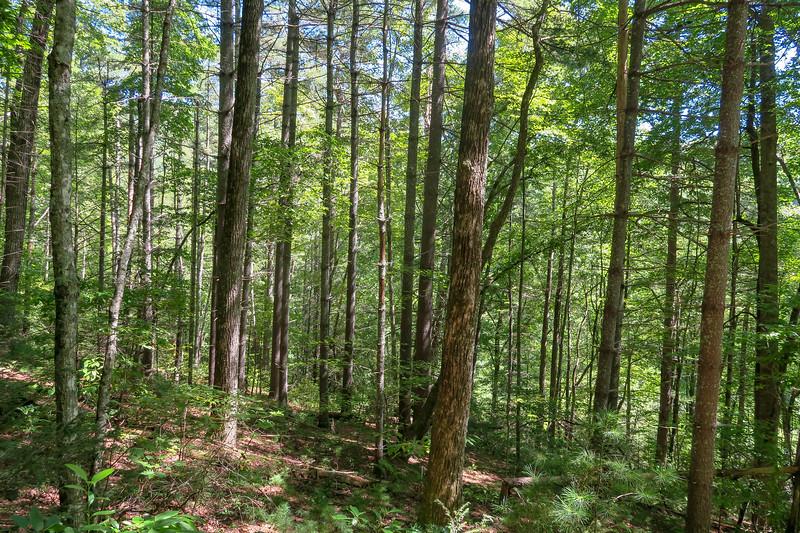 Black Mountain Trail -- 2,950'