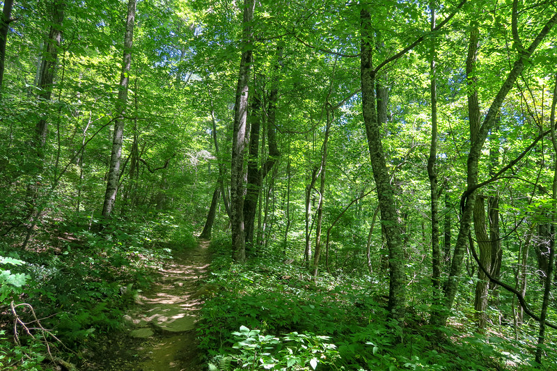 Black Mountain Trail -- 3,850'