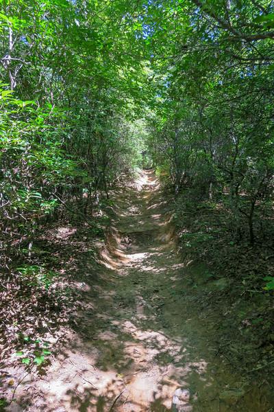 Black Mountain Trail -- 3,150'