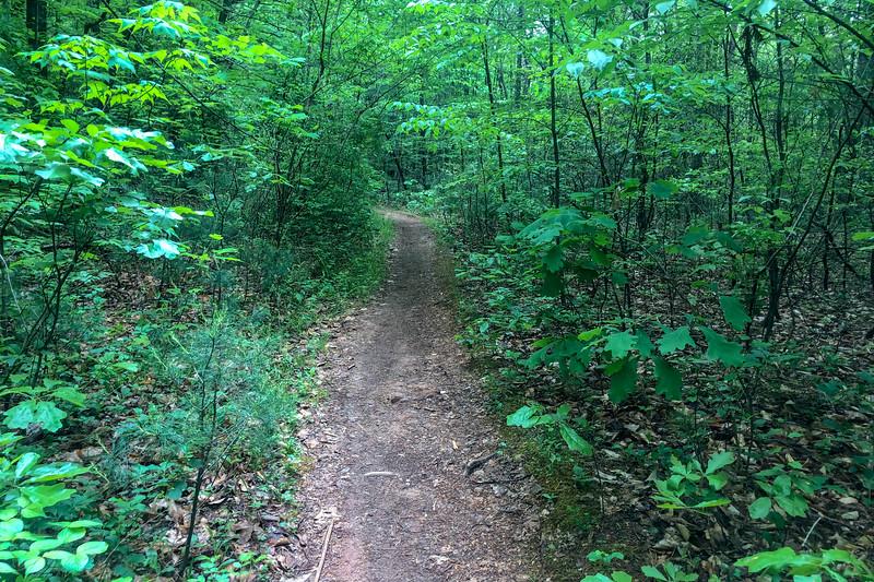 Boyd Branch Trail -- 2,280'