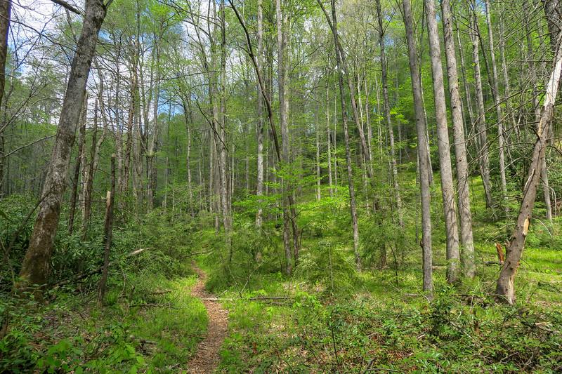 Bradley Creek Trail -- 2,490'