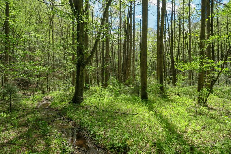 Bradley Creek Trail -- 2,590'