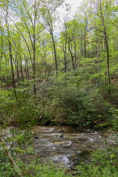 Bradley Creek Trail -- 2,580'